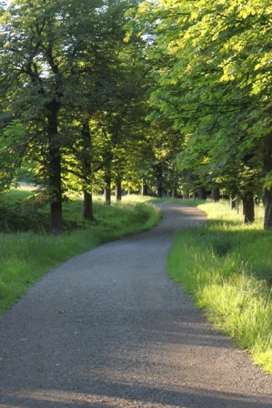 Weg Lainzer Tiergarten in