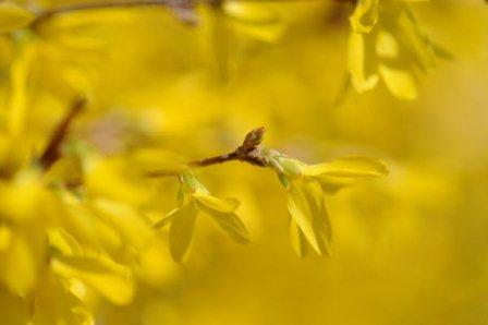 Fruehling Gelbe Blumen in