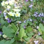 Blumenpotpourri