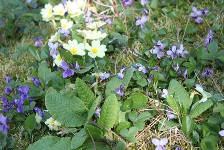 Blumenpotpourri in