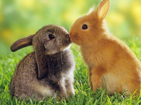 Geduldig wie die Kaninchen