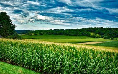 Eine Geschichte über das Geheimnis einer guten Ernte